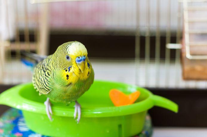 Zorg voor een badje waar de vogel in kan