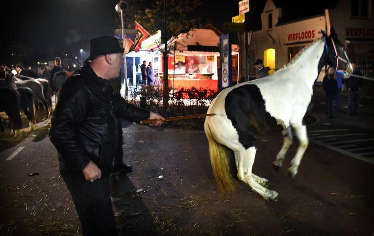 Paardenfeesten: vreugde of mishandeling? Beeld Marcel van den Bergh / de Volkskrant