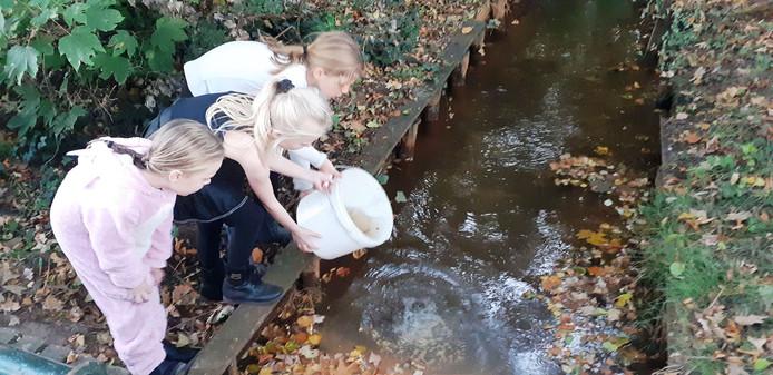 Sophie, Hailey en Yelena zetten de waterdiertjes terug die ze woensdag snel uit de droogvallende beek haalden.
