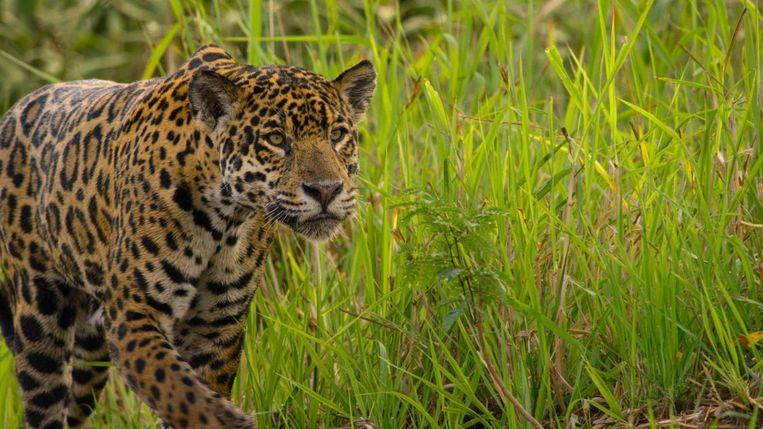 Een cameraman voor natuurfilms komt soms oog in oog te staan met levensgevaarlijke dieren.