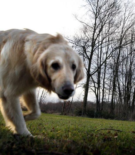 Hondenbelasting terug, prullenbakken weg? West Betuwe moet 4 miljoen besparen, dus niets is heilig