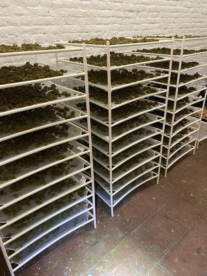 Tien kilo cannabis lag klaar voor de verkoop.