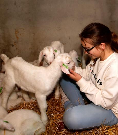 Een drukte van jewelste bij geitenboerderij: heerlijk knuffelen en spelen met jonkies