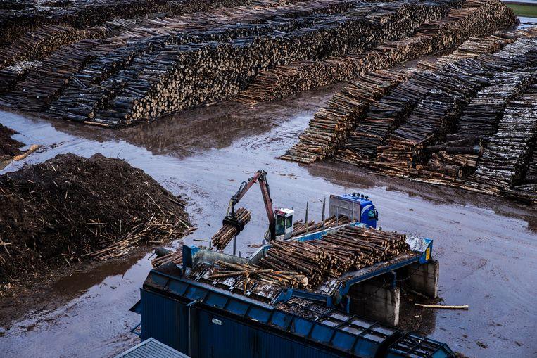 Granuul Invest fabriek in Osula produceert pellets. Hier wordt hout geshredderd. Beeld Waldthausen Marlena