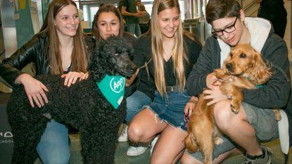 """Zo pakt hogeschool examenstress bij studenten aan: """"Knuffel met een hond en je voelt je op slag een stuk kalmer"""""""
