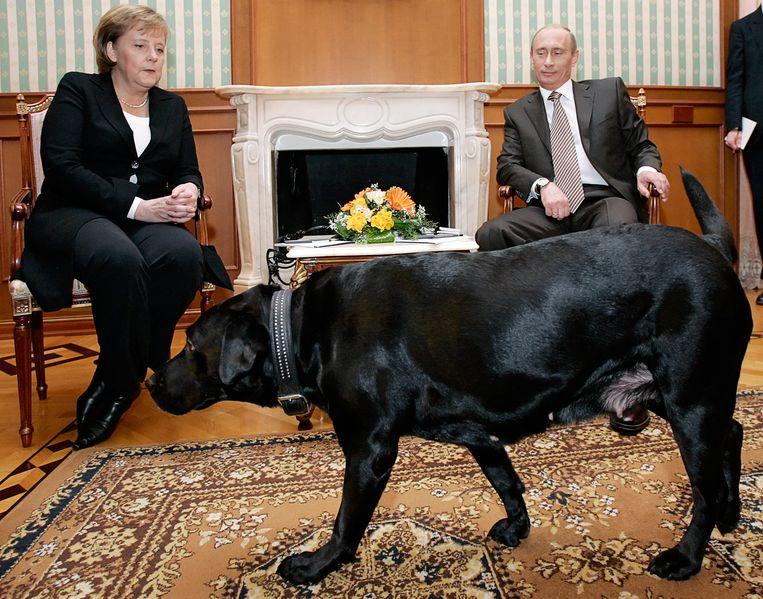 Vladimir Poetin en Angela Merkel  krijgen bezoek van Connie, de zwarte labrador van de Russische president. Beeld AFP