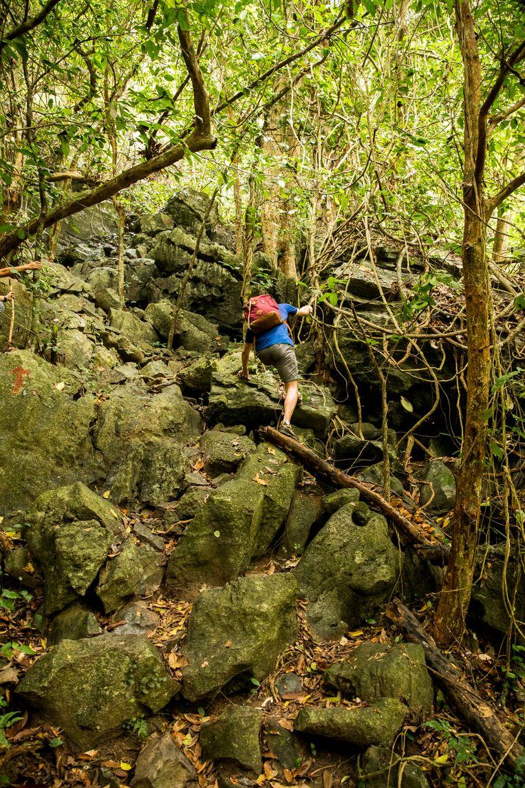 Wandelpaadje door de jungle van Cat ba. Beeld Marie Wanders