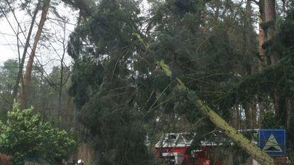 Brandweer heeft handen vol met boom op wegdek