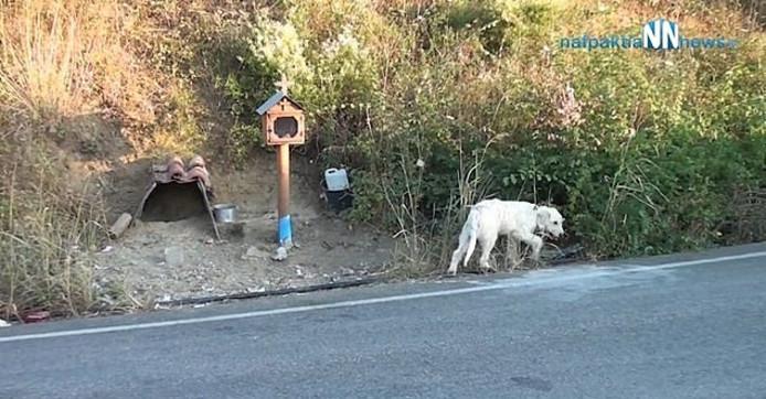 De hond op de plaats waar zijn baasje omkwam