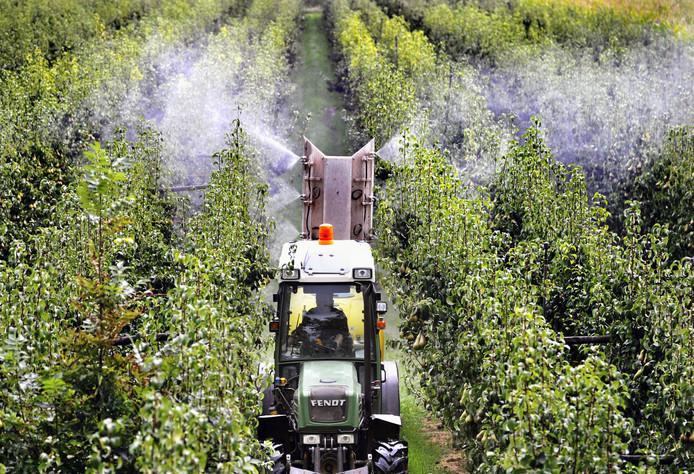 Een tuinder rijdt door zijn perenboomgaard en spuit gewasbeschermingsmiddel op de peren die rijp zijn voor de oogst