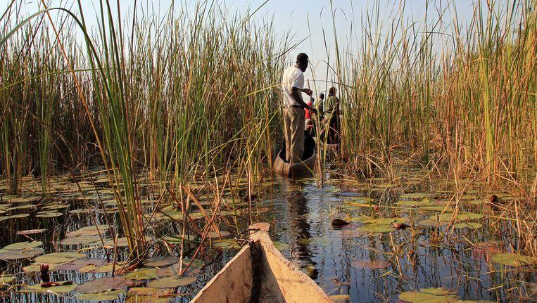 Botswana Beeld Daniel Lamborn