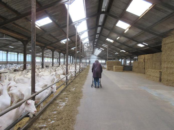 Een stal voor 1.000 geiten zien de omwonenden niet zitten.
