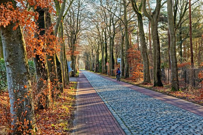 De gemeente wil 104 bomen kappen langs de Veenstraat in Molenschot, tussen de Rijksweg N282 en de kern van het dorp.