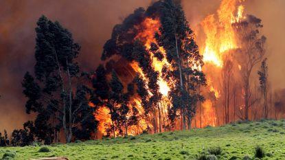 Tientallen bosbranden in Noord-Spanje, aangewakkerd door hoge temperaturen en wind