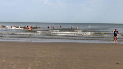 Waterratten kunnen niet wachten om in zee te springen