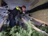 Politie 'oogst' 12.000 hennepplanten in twee dagen tijd