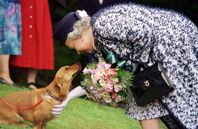 De Queen met haar Corgi.