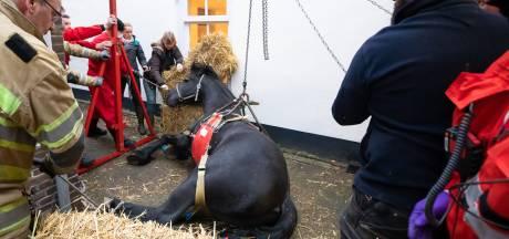 Grote reddingsactie voor vermoeid paard Fred (20), dat niet meer op kon staan
