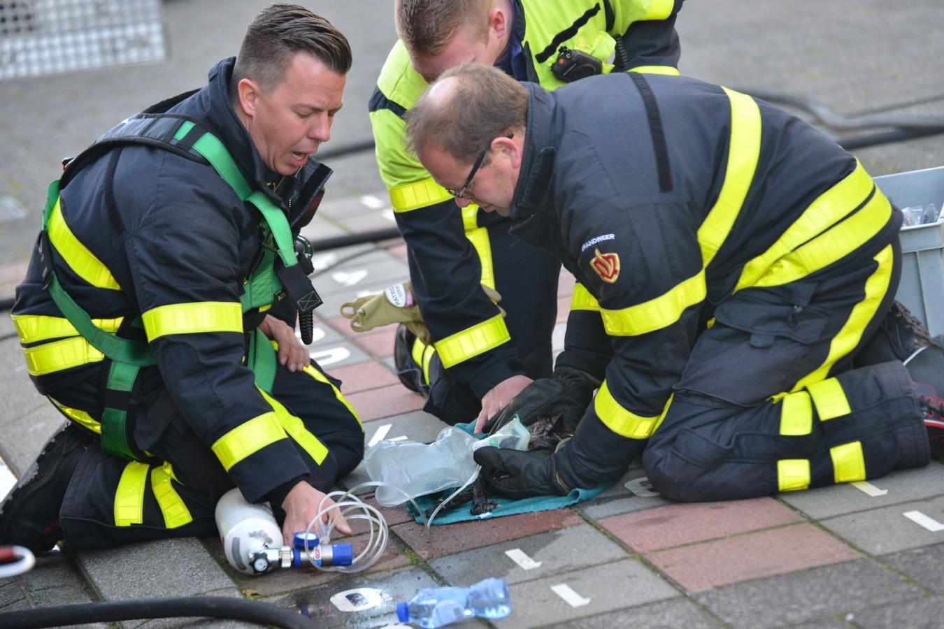 Brandweermannen ontfermen zich over katje.