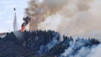 Opnieuw bosbrand op Gran Canaria: luxehotel en vakantiehuis geëvacueerd