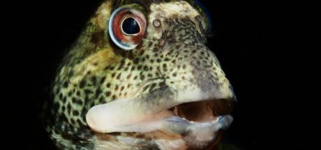 Hoe een slijmerig visje van René (42) opnieuw een Nederlands kampioen maakt