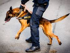 Grote vechtpartij op kermis Breda in de kiem gesmoord na ingrijpen politiehond
