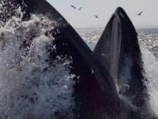 Des pêcheurs émerveillés par la visite d'une baleine