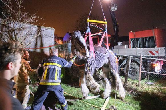 Belgie 20190212 Kontich-Kazerne Dorre Eikstraat reddingsaktie van een 23 jarig paard dat niet meer recht geraakte.