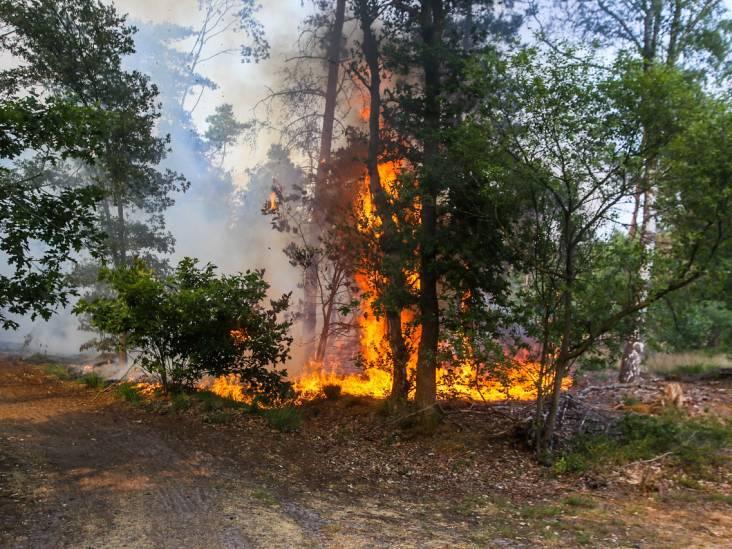 Bosbrand nabij Helmond onder controle