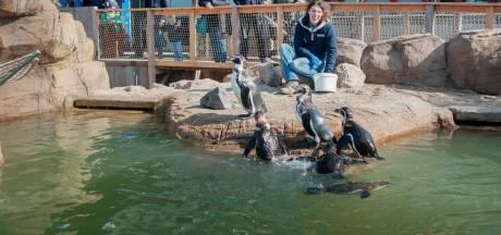 Sea Life duurste 'dierentuin' in Haagse regio