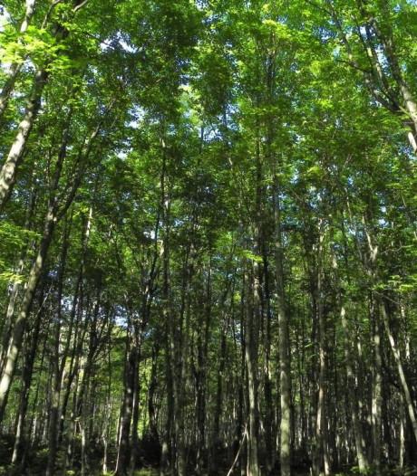 Wat moet de gemeente Tiel met een bos?