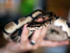 Python vermist in Hengelo