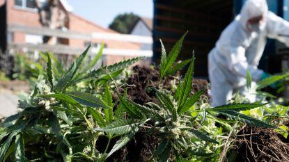 Duo schuldig aan uitbaten van cannabisplantage