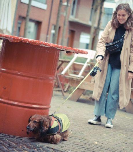 Wandelen met honden om coronazorgen even te vergeten: studenten Karel de Grote Hogeschool kunnen wandelen met enthousiaste viervoeters om eenzaamheid te doorbreken