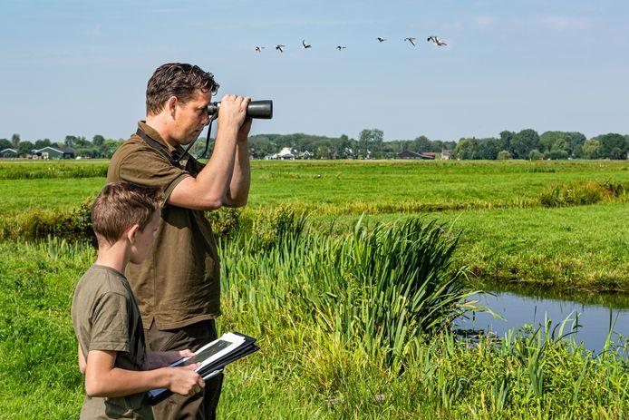 Faunabeheerder Harm Koelewijn van Wildbeheer Eenheid Krimpenerwaard telt Canadese ganzen bij de Schaapjeszijde in de Krimpenerwaard. ZIjn zoon Willem helpt hem een handje.