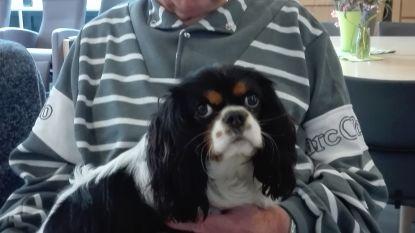 Hondje Millie brengt wekelijks bezoekje aan dagverzorgingscentrum Ten Kerselaere