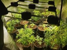Hennepkwekerij met 26 plantjes opgerold in Bergentheim: twee verdachten aangehouden