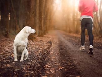 Als een hond naar jou loopt tijdens het joggen, wandelen of fietsen, hoe moet je dan reageren?