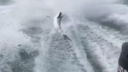 Mannen die haai achter speedboot meesleurden riskeren vijf jaar cel
