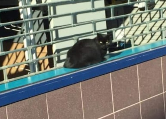De kat werd ontdekt door een voorbijganger en is vermoedelijk via het plafond de winkel binnengekomen.