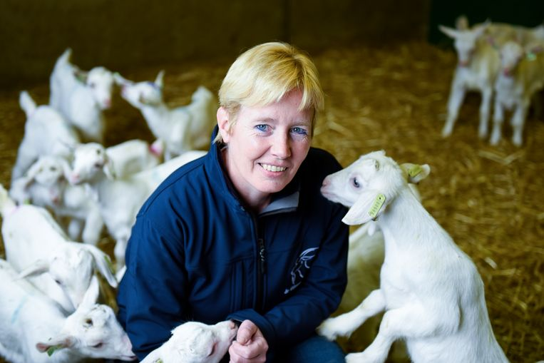 Jeannette van de Ven is voorzitter van de LTO-vakgroep geitenmelkhouderij.  Beeld Carl Mureau