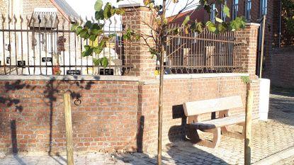 Zottegem plant Vredesboom aan kerk op Kruiswaterplein