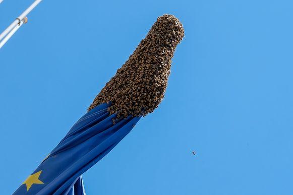 Bijen in centrum Brusssel in de buurt van Bozar op Europese vlag