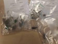 Man uit Rijen opgepakt om te veel aan softdrugs
