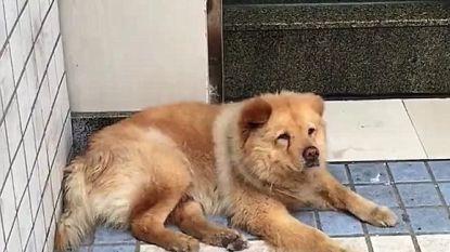 Vertederend: trouwe hond wacht elke dag twaalf uur aan station tot zijn baasje terugkomt van zijn werk