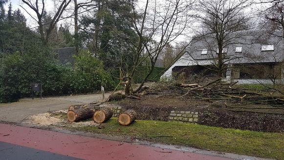 In Schilde viel zaterdag al een boom om.