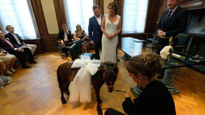 Knuffelpaardje draagt trouwringen van Rudi en Nadine