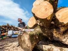 Tientallen esdoorns in Zwijndrecht moeten worden gekapt