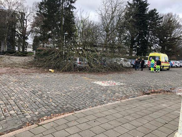 Op de parking van het Middelheim viel ook een boom op geparkeerde wagens.