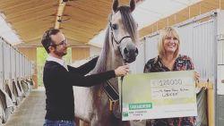 Turnhoutse stoeterij veilt ongeboren paard voor 120.000 euro